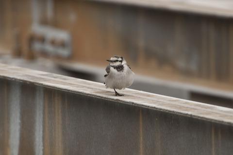 羽田空港にいた鳥