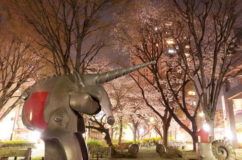 公園の夜桜
