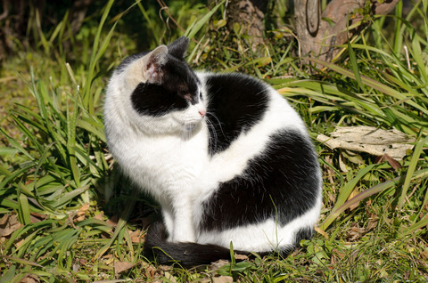 小石川植物園の猫