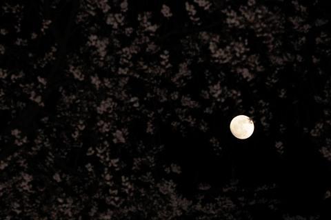 六義園 しだれ桜ライトアップ