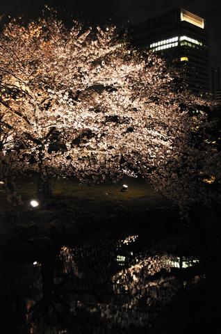 浜離宮恩賜庭園の夜桜