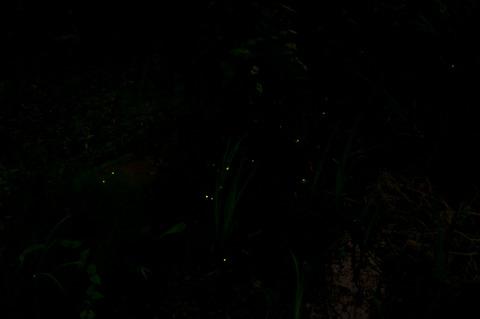 よみうりランド「ほたるの宵」
