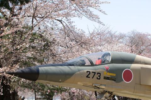 F-1支援戦闘機と桜